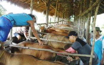 DKPP Sukamara saat memeriksa ternak milik masyarakat.
