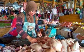 Permintaan ayam di pasar tradisional tembaga indah meningkat 100 persen pada bulan ramadan