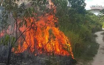 Kobaran api membakar semak belukar di lahan di Desa Tarusan Danum Kecamatan TSG, Minggu