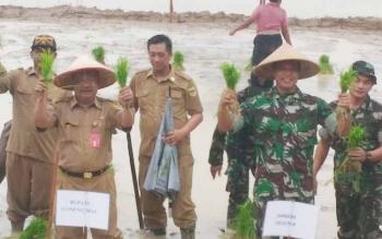 Situasi saat tanam perdana musin tanam Asep di lahan pertanian Sakata Juri Kuala Kurun, Kabupaten Gunung Mas, Senin (10/7/2017).