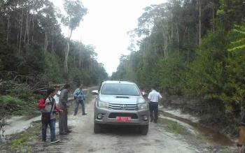Hutan yang berada di kawasan PT IFP masih hijau kalau di babat secara besar-besaran akan berdampak pada kehidupan orangutan dan 7 Desa di Kecamatan Mantangai.