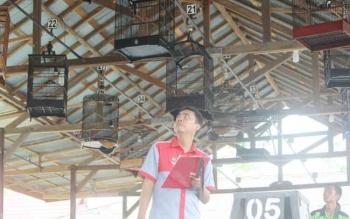 Tim juri Ronggolawe Pangkalan Bun sedang melakukan penilaian dalam Festival dan Lomba Burung Berkicau di Gantangan Pasar Palagan Sari, Minggu (16/7/2017)