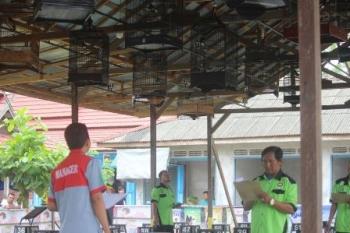 Sejumlah tim juri tengah menilai kicau burung pada Festival dan Lomba Burung Berkicau Piala Ronggolawe yang digelar di Gantangan Pasar Palagan Sari, Pangkalan Bun, Kabupaten Kotawaringin Barat, Minggu (16/7/2017).