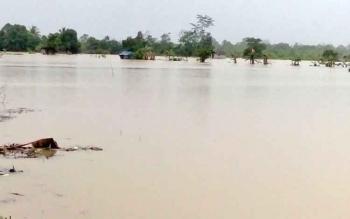 Lahan pertanian di Sakatan Juri Kuala Kurun, Kabupaten Gunung Mas terendam air
