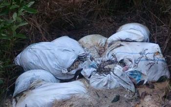Ratusan karung limbah jeroan dan bangkai ayam dibuang sembarangan oleh peternak di belakang Sampuraga Baru, Kota Pangkalan Bun, Kabupaten Kotawaringin Barat.