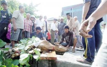 Suasana penyembelihan hewan kurban saat Idul Adha