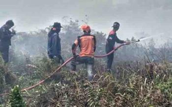 Petugas berjibaku memadamkan api pada lahan yang terbakar di Kotim.