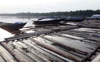 Ribuan Kayu Ilegal Yang Diamankan Kepolisasian Polres Kapuas di DAS Kapuas Desa Pulau Keladan Kecamatan Mantangai
