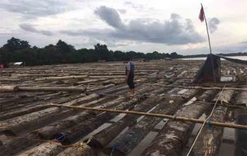 Aparat Polda Kalteng mengamankan ribuan potong kayu log di DAS Barito, Minggu (13/8/2017) sore