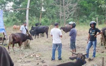 Transaksi jual beli hewan qurban di Kota Sampit.
