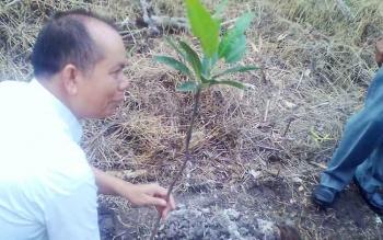 Bupati Kapuas Ben Brahim S Bahat saat menanam pohon di pinggiran jalan kampung modern.