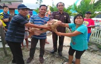 Anggota DPRD Gunung Mas, Tatau Arnold Pisy (dua dari kanan) menyerahkan bantuan seekor anakkan babi kepada warga\r\n