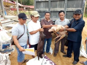 Anggota DPRD Gunung Mas Untung Jaya Bangas (kanan) menyerahkan bantuan ternak babi secara simbolis kepada masyarakat di Desa Tumbang Pajangei, Sabtu (26/8/2017)
