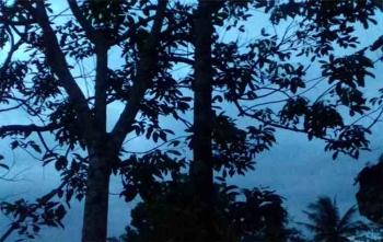 Di pohon rambutan inilah Topan Julian mengakhiri hidupnya dengan cara gantung diri, Sabtu (26/8/2017)
