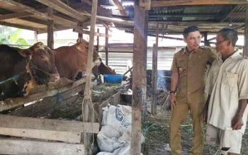 Bupati Kotim saat berbincang dengan pemilik sapi di Kotim.