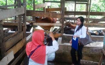 Petugas dari Dinas Pertanian Barito Utara saat melakukan pemeriksaan terhadap hewan kurban
