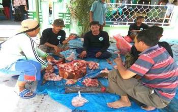 Panitia kurban saat menyembelih sapi, Jumat (1/9/2017)