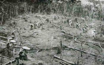 Sejak dulu masyarakat Dayak menanam menanam padi dengan cara tradisional