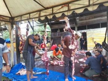 Panitia Kurban dari PHBI Kotim sedang bekerja menguliti dan membagi daging kurban dalam paket-paket kecil yang akan dibagikan kepada 750 orang pemegang kupon