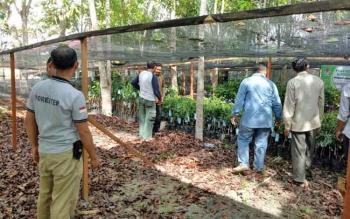 Kepala UPT KPHP Sukamara - Lamandau, Arianto saat menerima bibit tanaman.