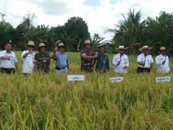 Wali Kota Palangka Raya Riban Satia bersama sejumlah kepala SOPD melakukan panen perdana padi lahan gambut di Kelurahan Kalampangan, Kecamantan Sebangau, Rabu (6/9/2017).