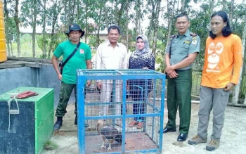 Komandan BKSDA Pos Jaga Sampit Muriansyah saat menerima Elang yang diserahkan oleh Anggota DPRD Kotim, Sutik