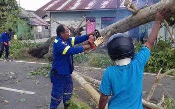 Pohon tumbang di Jalan Pemuda, Kuala Kapuas.