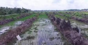 Inilah kawasan pertanian yang ada di wilayah selatan Kotim yang merupakan lambung padi.