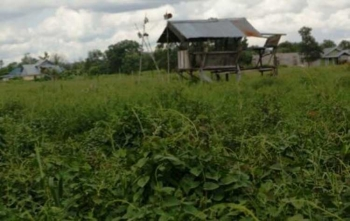 Lahan inilah yang disengketakan yang akhirnya menyeret dua mantan Kadis Pertanian dan Peternakan Kabupaten Kotawaringin Barat