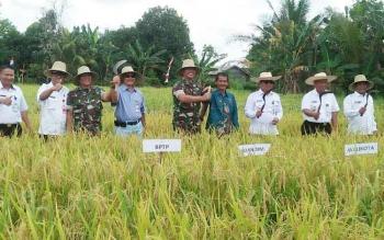 Wali Kota dan pejabat lainnya saat panen pertama padi di lahan gambut baru-baru ini.