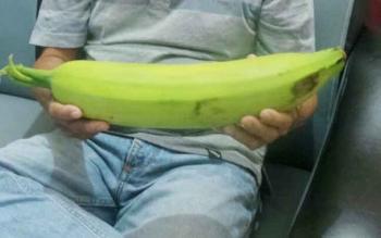 Nordin (53) memperlihatkan pisang raja dengan ukuran cukup besar dengan berat 1,5 kg dan panjang 42 cm.