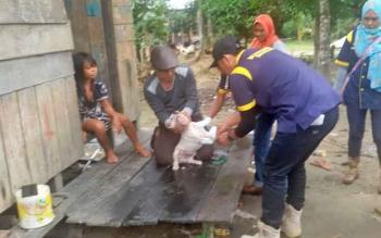 DKPP Sukamara dan Tim Balai Viteriner (Bivet) Banjarbaru saat melakukan pengambilan sampel darah anjing.
