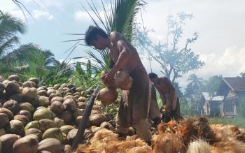 Warga Desa Parebok, Kecamatan Teluk Sampit, Kabupaten Kotawaringin Timur (Kotim) membersihkan serabut kelapa.