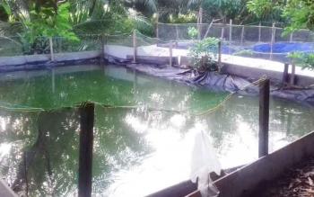 Tambak ikan kelompok penambak di Kelurahan Pasir Putih, Kecamatan MB Ketapang, Kabupaten Kotim.