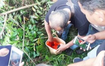 Aparat kepolisian melakukan pengecekan bakul berisi tembuni.