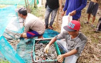 Lokasi kolam pembudidaya ikan di Kelurahan Bereng, Kabupaten Pulang Pisau.