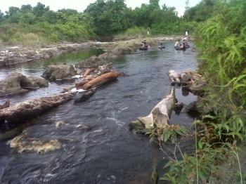 Sungai Salak di sekitar Sport Center Kasongan, Kabupaten Katingan, setiap sore dan hari libur selalu ramai dikunjungi warga. Senin (16/10/2017), debit air Sungai Salak meningkat akibat tingginya intensitas curah hujan dalam beberapa hari terakhir.