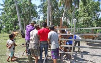 Kandang Jepit bantuan dari Dinas Ketahanan Pangan dan Pertanian (DKPP) Sukamara.