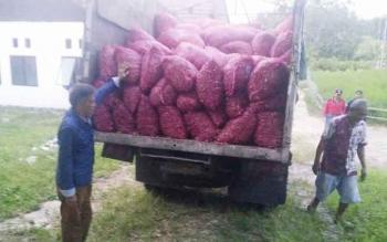 Kepala Dinas Pertanian Barito Utara, Ir Setia Budi mengecek langsung bantuan bibit bawang merah dari bantuan pemerintah pusat dan Provinsi Kalteng