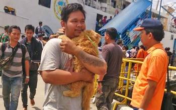 Jefti Setyara Bagas sesaat setelah turun dari kapal evakuasi Kirana I dengan menggendong Kunyis kucing anggora kesayangannya