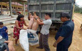 Warga Kuala Kurun, Kabupaten Gunung Mas saat menerima bantuan bibi ternak babi dari dinas\\r\\n