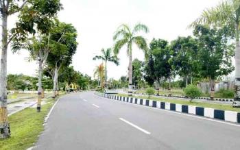 Pohon pelindung yang ditaman pemerintah daerah disepanjang Jalan Tjilik Riwut.