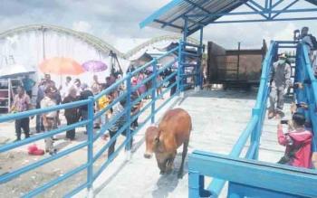simulasi tindakan karantina hewan ternak di IKH yang dioperasikan oleh Balai Karantina Kelas II Palangka Raya Wilayah Kerja Pangkalan Bun.