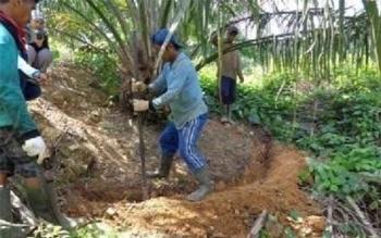 Pembuatan silt-pit di batas luar piringan secara manual