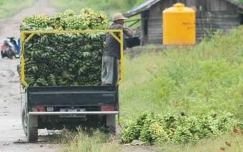 Hasil panen pisang kepok milik petani di Desa Bangun Harja Kecamatan Seruyan Hilir saat dijual untuk dibawa keluar daerah Seruyan, beberapa waktu lalu.