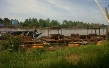 Keramba ikan berjejer tepi Sungai Katingan, sekitar Jembatan Kasongan, Senin (13/11/2017).