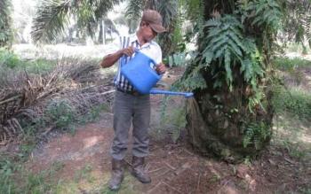 Efektifitas Asam Humik Perbaiki Kandungan Fosfor di Tanah Berkadar Liat Tinggi