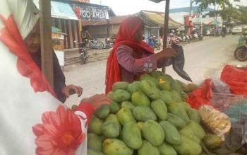 Penjual mangga saat membungkus buah yang sudah dibeli warga.