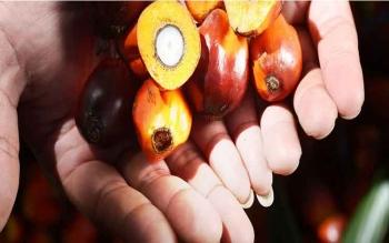 Nilai Pasar Minyak Sawit Global Tembus Rp1.255 Triliun Pada 2021