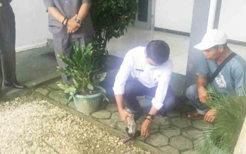 Wakil Bupati Barito Utara, Ompei Herby saat memusnahkan barang bukti berupa pistol dengan memotongnya dengan gerinda mesin